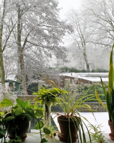 Green inside; frosted and white outside