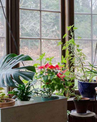 houseplants-dining-room-1024x660
